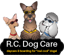 RC Dog Care Bucks County, PA